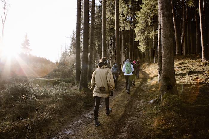 Menschen wandern einen Waldweg entlang